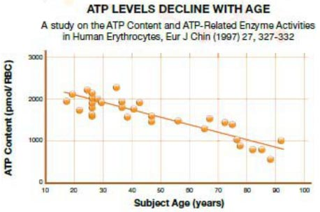 ATP energy levels decline with age
